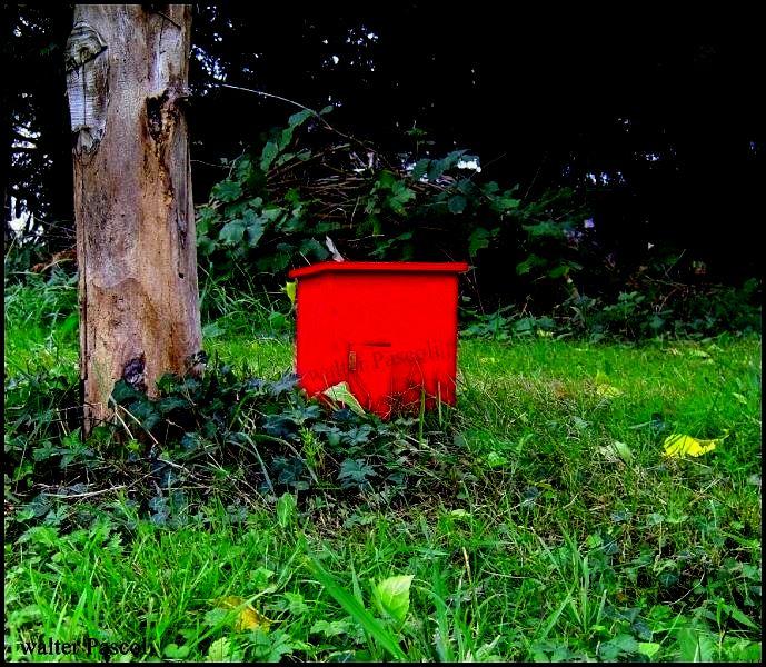 cabane rouge nature